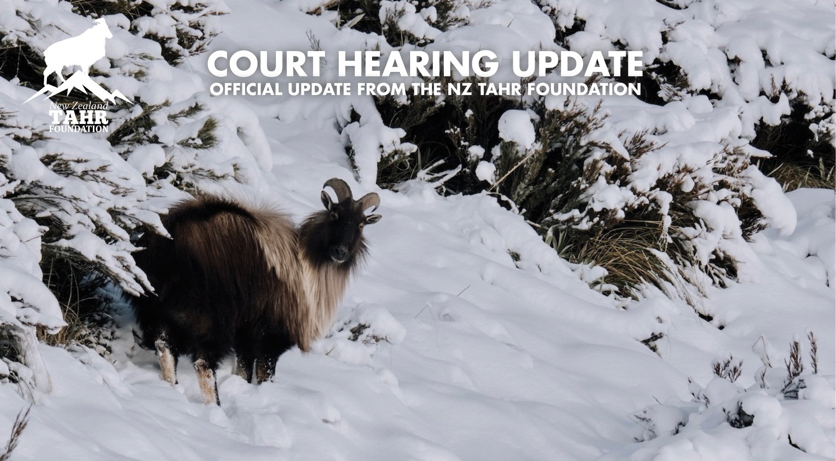 Court Hearing Update