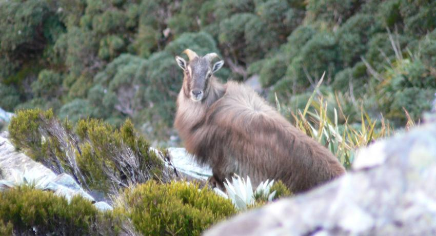 TAHR MT COOK APRIL 2008