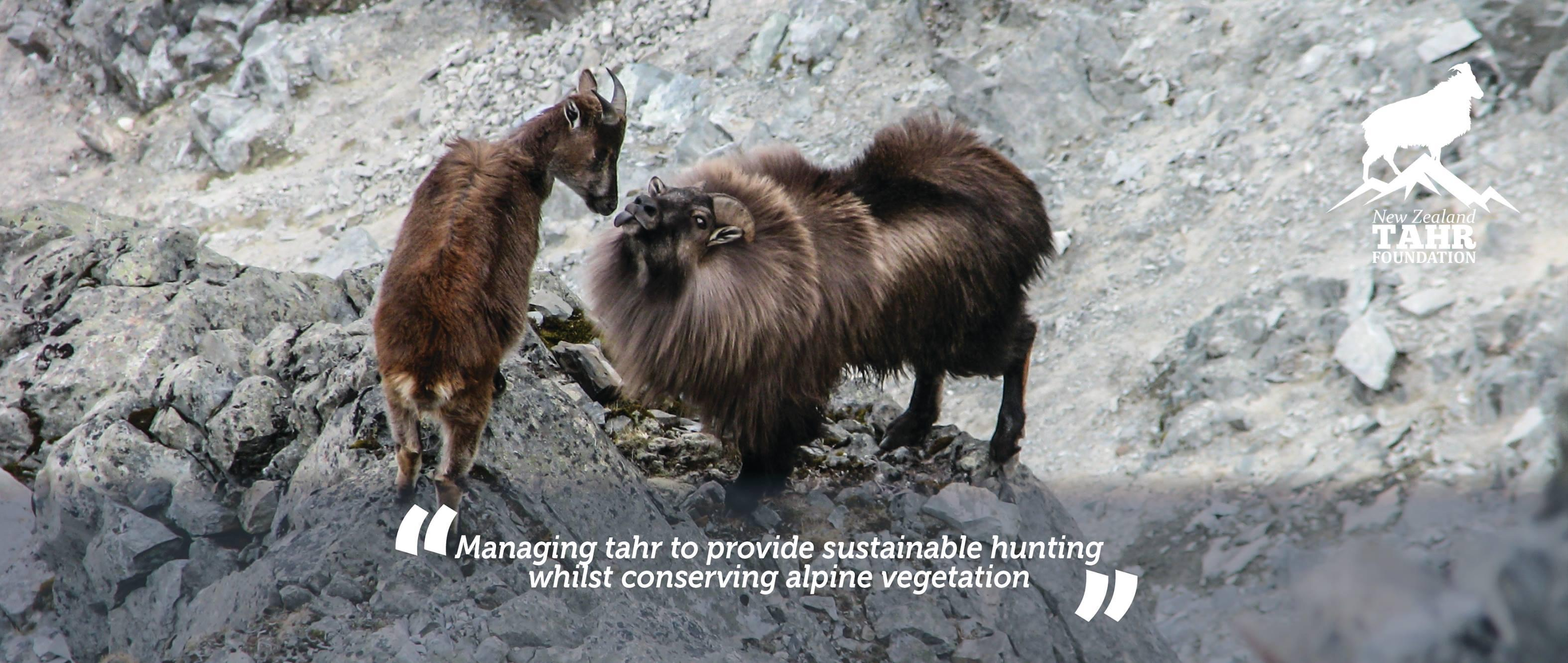 New Zealand Tahr Foundation